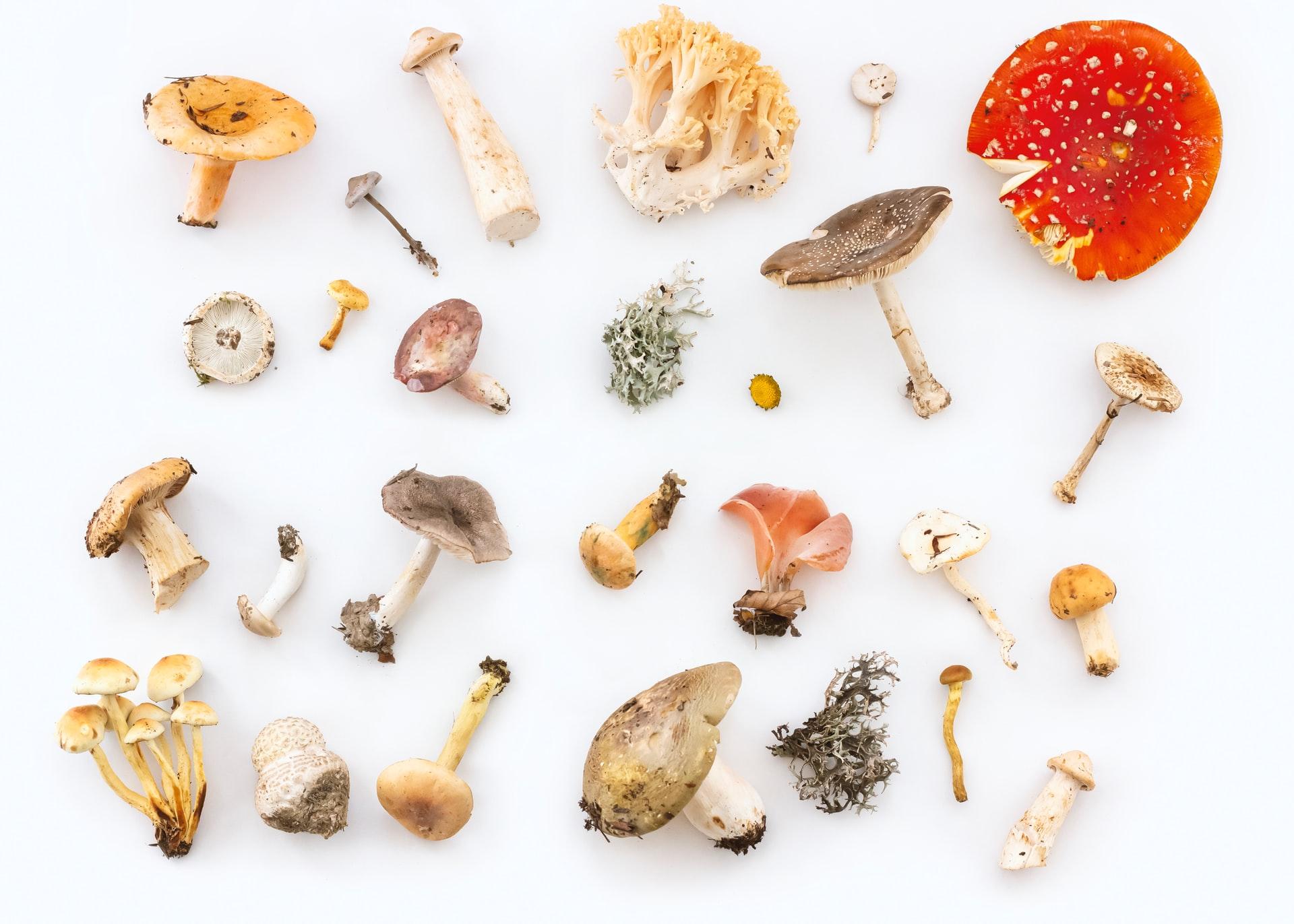 Variety Of Mushroom Spores